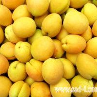 Саженцы абрикоса Ананасный Шалах
