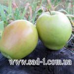 Саженцы яблони Минкар
