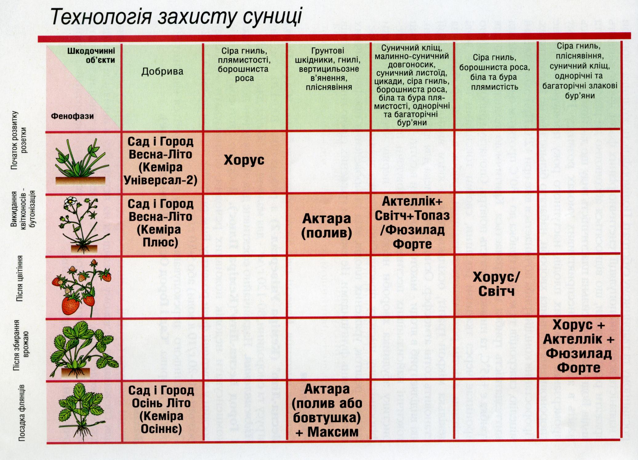 Схема обработки земляники садовой от болезней