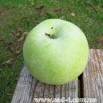 Саженцы яблони Симиренковец